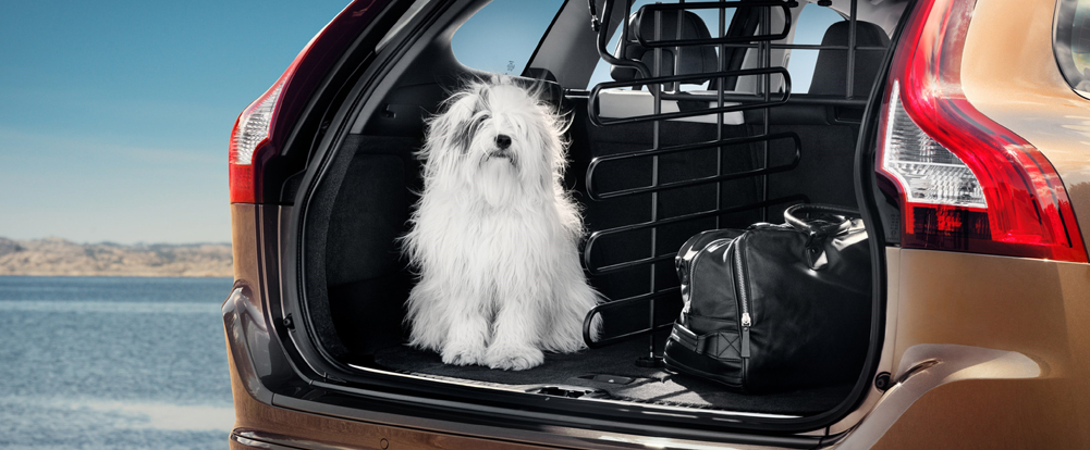 Volvo Helping Keep Dogs Safe, Get Adopted - Swedespeed
